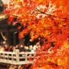 そうだ、京都へ行こう!