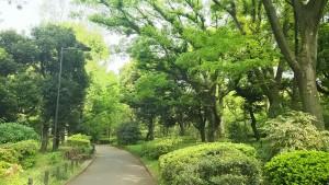 北の丸公園の新緑