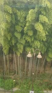 狛江駅の竹林